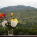 Roses01web